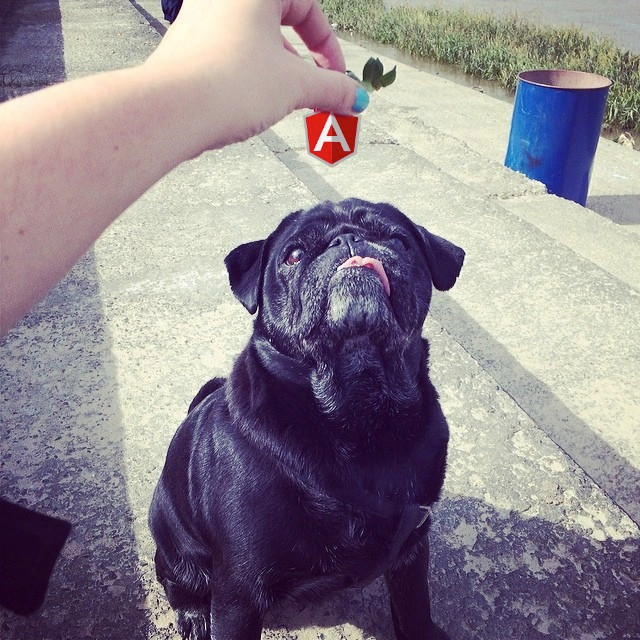 Zuza the pug on AngularJS
